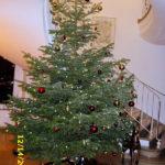 Kleine Wanderung - Gänseessen - 14.12.2017 - Haus der Siegerländer Wirtschaft - Weihnachtsbaum