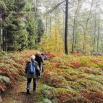 Große Wanderung - Geisweid-Langenbachtal - 16.10.2019 - Bild 05